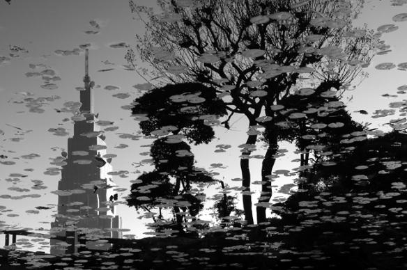 fall in black & white (ciro@tokyo)